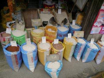 Rizskalauz: a rizsfajtákról általában