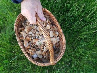 Erdei gyümölcs és gomba illetéktelen kezekben