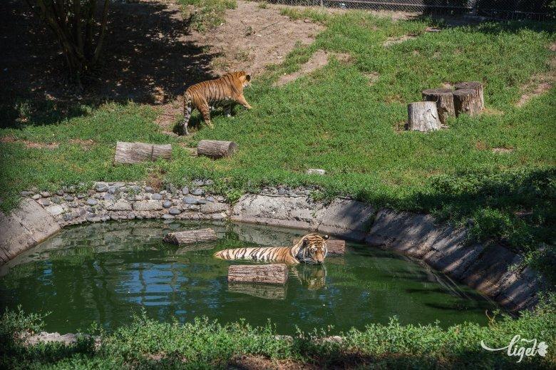 Hétpecsétes állatkerti titkok a néhai igazgatótól