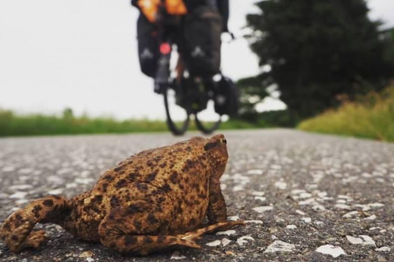 Hosszú úton hazafelé: túl az út kétharmadán a kocsárdi fiatal