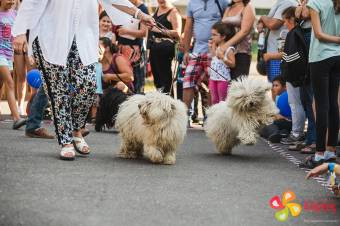 Magyar embernek magyar kutya – hasznos ebek, de simogatni is lehet