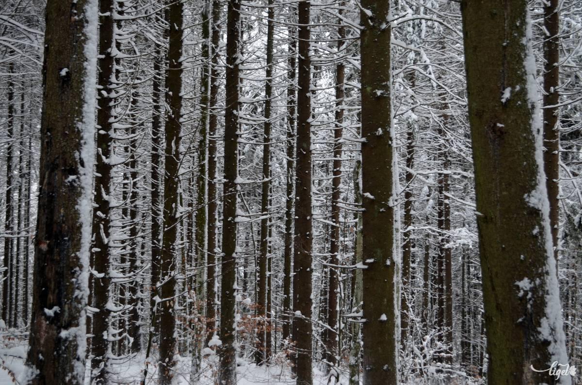 Halszálkás erdő Piricske felé •  Fotó: Jánosi Csaba