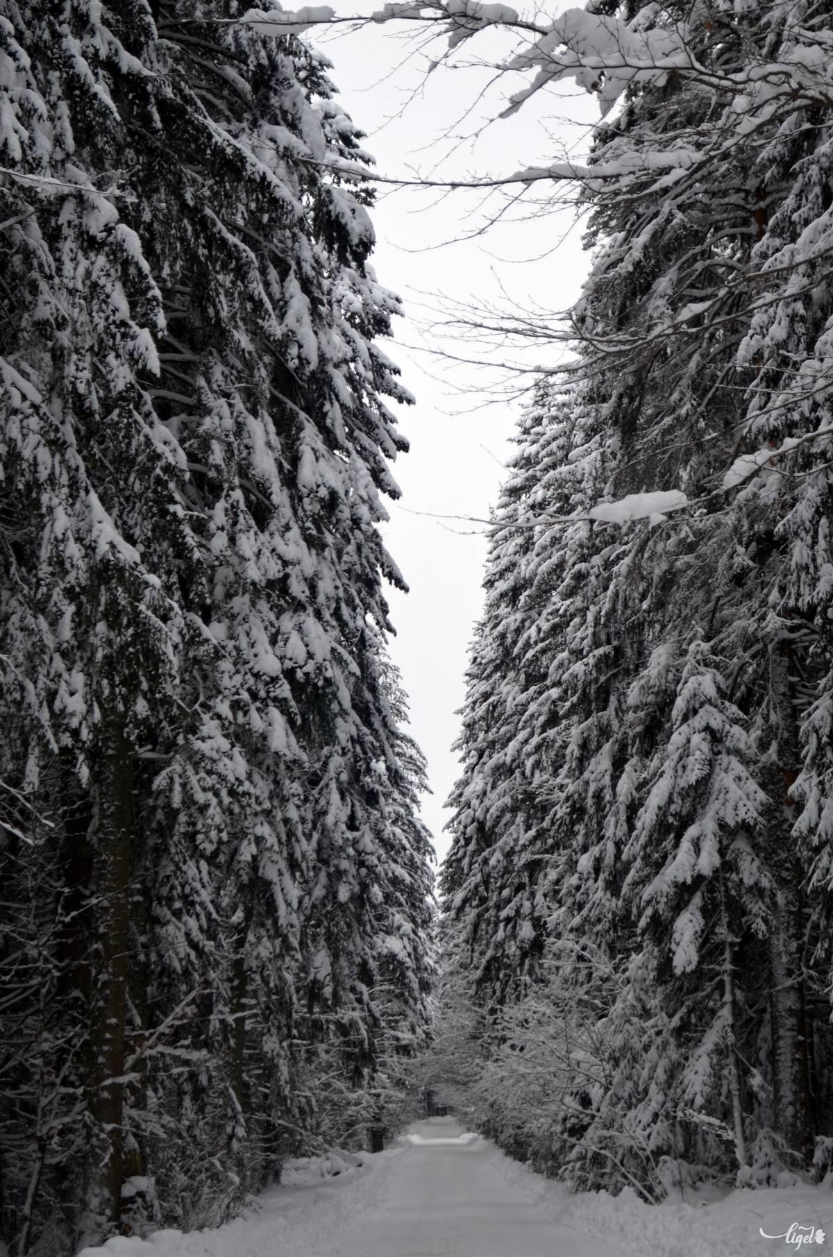 A piricskei út •  Fotó: Jánosi Csaba