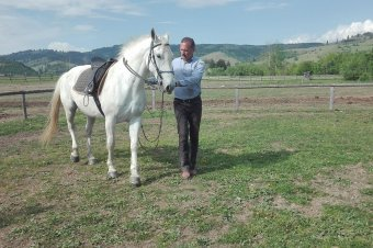Értékesebbé válhat a magyar stílus, a magyar ló