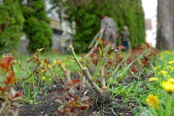 Májusi teendők a kiskertben: a kertészmérnök tanácsai