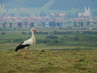 Fekete gólya, sárga tavirózsa. Nálunk is vannak kipusztulóban lévő állatok, növények