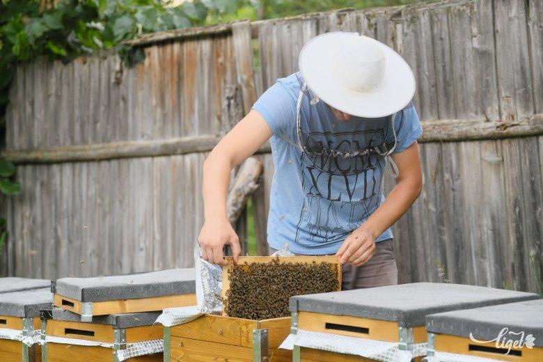 Olyan méhész is van, aki idén egyetlen kilogrammnyi mézet sem tudott termelni