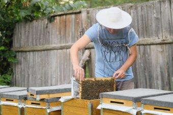 Nem annyira édes az erdélyi méhészek élete – A jövedelmezőség folyamatos csökkenését a méztermelők szakképzése ellensúlyozhatja