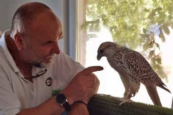 A sólymok szeretete: ember és madár ősi barátsága