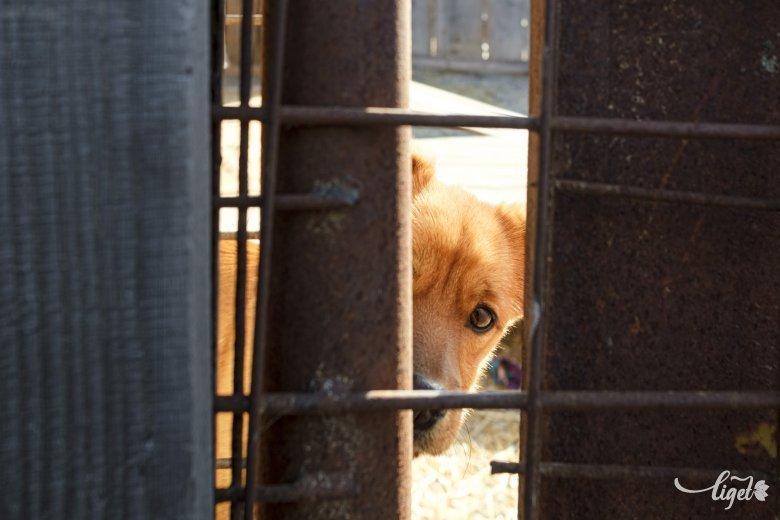 Kutyát gyilkolt, majd kiposztolta – felelni fog érte
