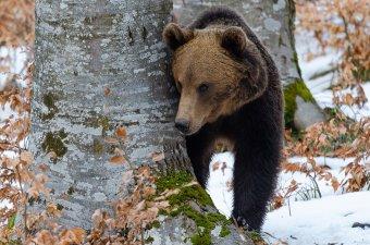 Állatok télen – egy udvarhelyi természetfotós szemével