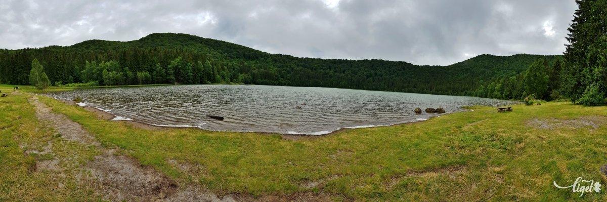 A tó partján néhol látható habosodás is az algás fertőzés jele •  Fotó: Rédai Attila