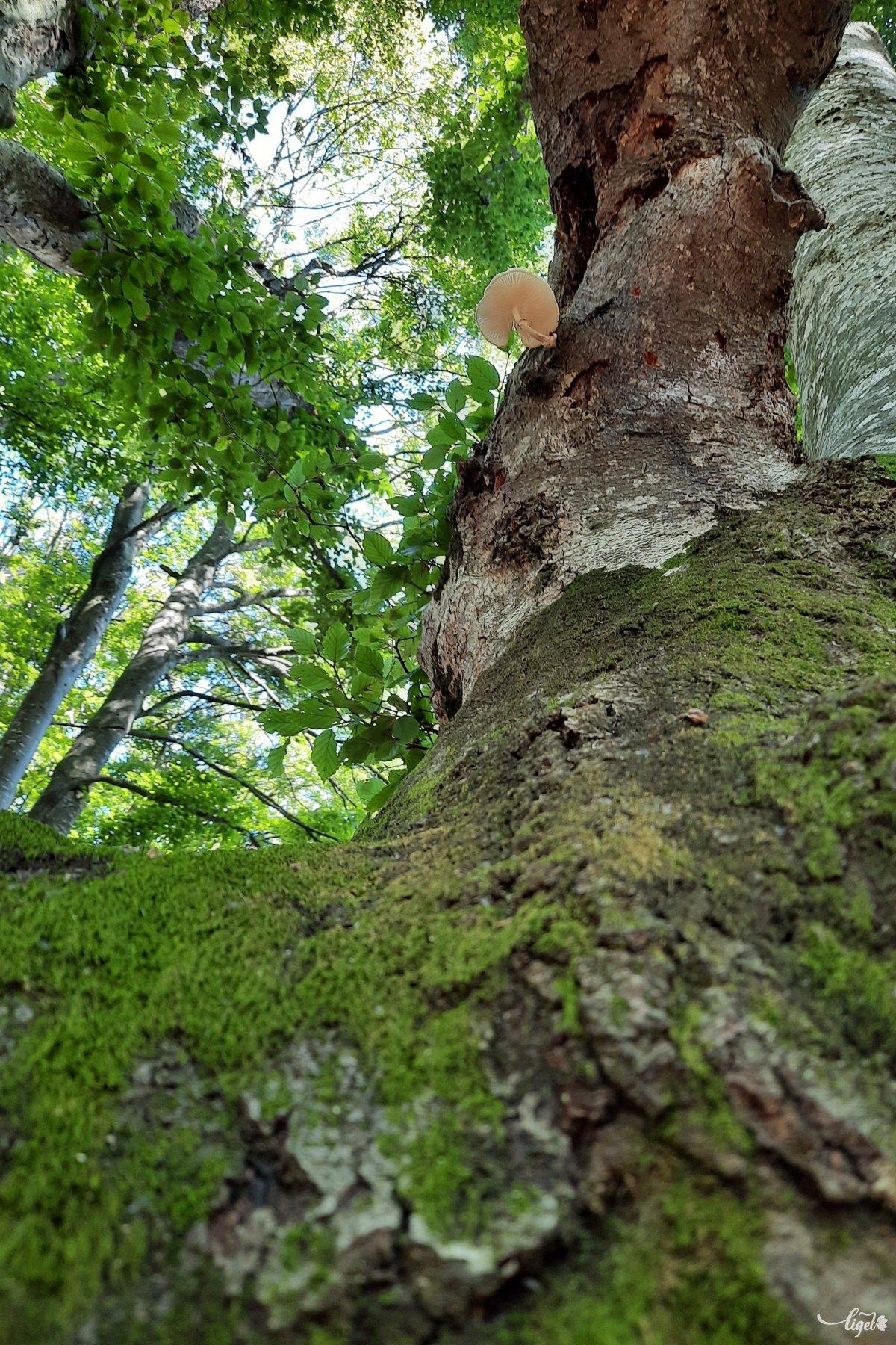 Az erdők szerelmeseinek sem kell itt csalódniuk •  Fotó: Rédai Attila