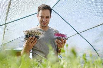 Mikrozöldek. Kertészkedés különc módon
