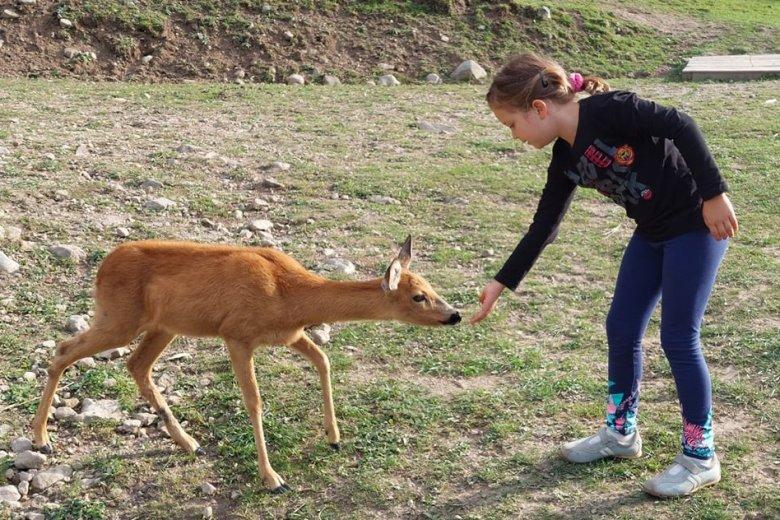 Megnyugtató az állatok közelsége a Babusgatóban