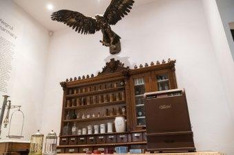 Vásáros utak kereszteződésében (11.): gyógyszertár a Fekete Sashoz