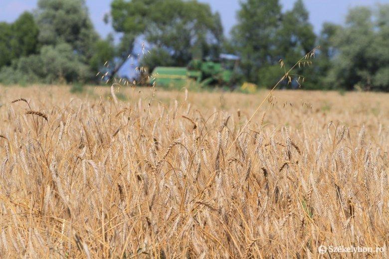Kárpát-medencei hagyományőrző aratóünnepre készülnek Székelyudvarhelyen