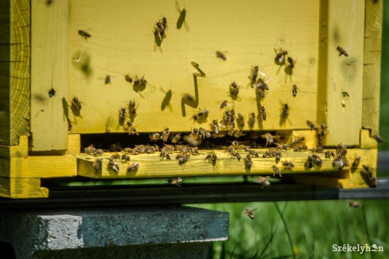 Az is lehet, hogy más munkahely után kell nézniük a méhészeknek