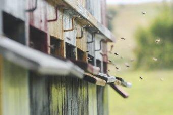 Korcsog Ferenc aradi méhész: munkaszeretetre tanítanak a méhek