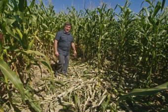 Perelik az oltyán gazdák a környezetvédelmi minisztériumot a vadkárok miatt