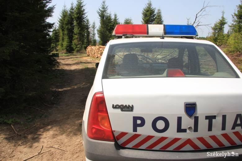 Dâmboviţa megyei férfiak loptak fát Csíkszenttamáson