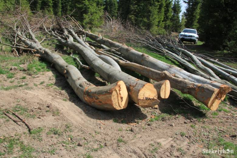 Hat erdész életébe került az elmúlt években az illegális fakitermelés, minisztériumi beavatkozást sürget a szakszervezet