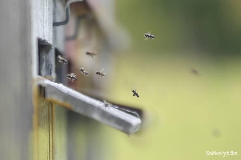 Még az idősebb méhészek sem emlékeznek olyan rossz évre, mint az idei