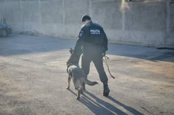 Koronavírus-fertőzést szimatolt ki egy utasnál az erre a célra kiképzett kutya a Madrid-Nagyszeben repülőjáraton