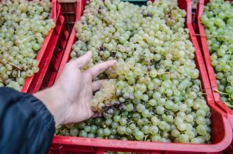 Rendkívüli intézkedésekkel támogatja az EU a bor-, zöldség- és gyümölcságazatot