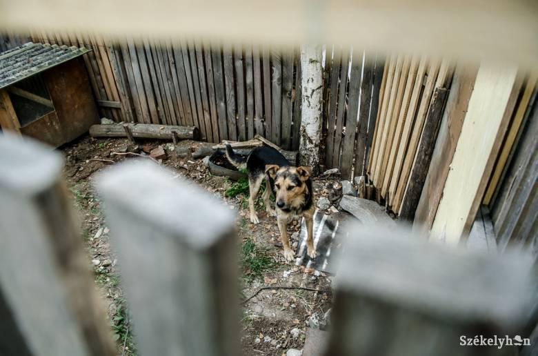 Állatrendőrség csaphat le a házi kedvenceket vagy más jószágokat bántalmazókra