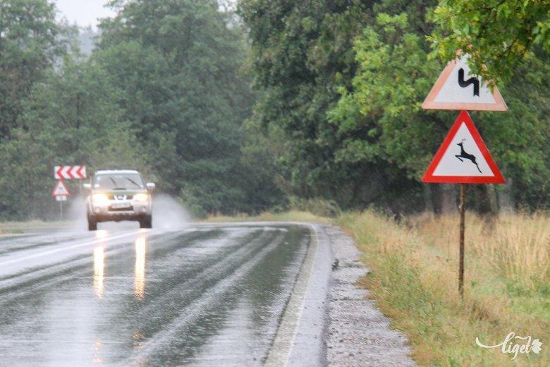 Fokozott figyelem szükséges az utakon, busás összeget kell fizetni az elütött szarvasért