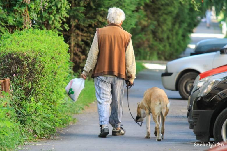 Új kutyatartási szabályzót fogadott el a csíkszeredai önkormányzat