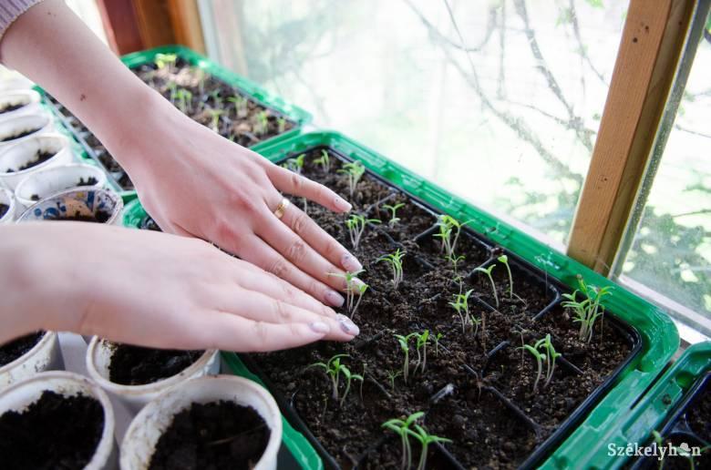 Felértékelődött a háztáji kertészkedés
