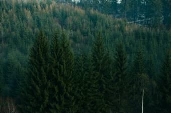 Újraállamosítanak közel tízezer hektár, a Bánffyaknak visszaszolgáltatott erdőt Maros megyében