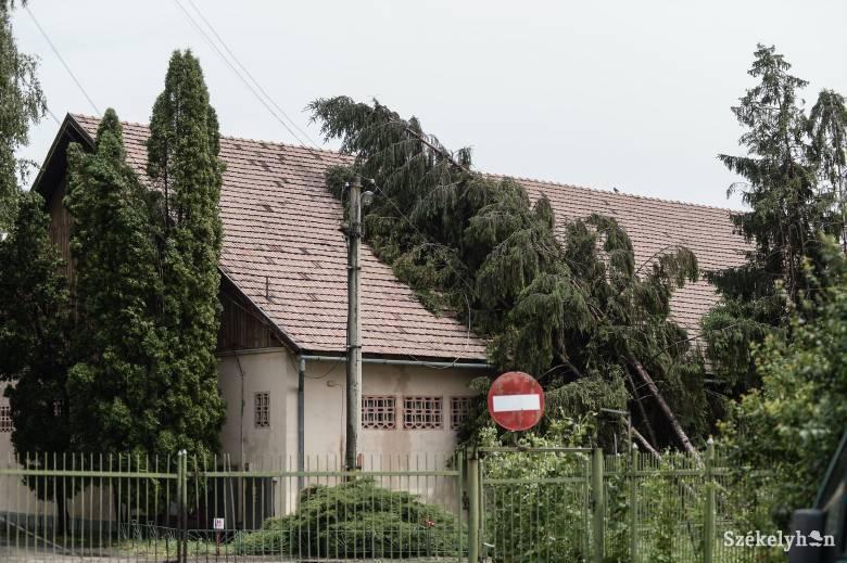 Lakóövezetben nem javallott fenyőt ültetni – kivágják a veszélyesnek ítélt fákat