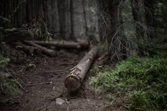 """Új fanyomkövető rendszert és """"valós reformokat"""" követelnek a környezetvédők"""