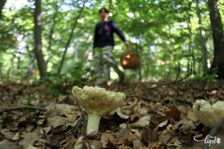 Őszi gombákat ismertető napot tartanak Sepsiszentgyörgyön