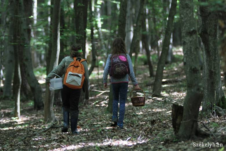 Akad még valaki, aki puska nélkül be mer menni az erdőbe?