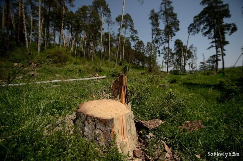 Előrelépés történt az erdészeti károk okozta jövedelemkiesés megtérítése esetében