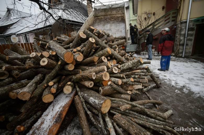 Kevés a tűzifa, három évre felfüggesztenék az exportot