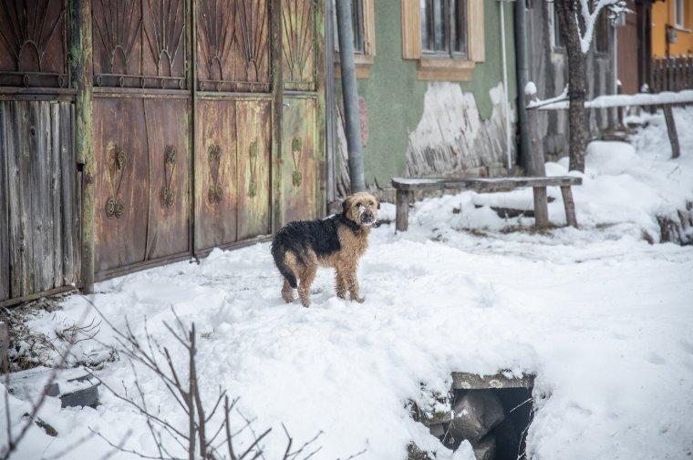 Állatkínzás ügyében nyomoz a rendőrség