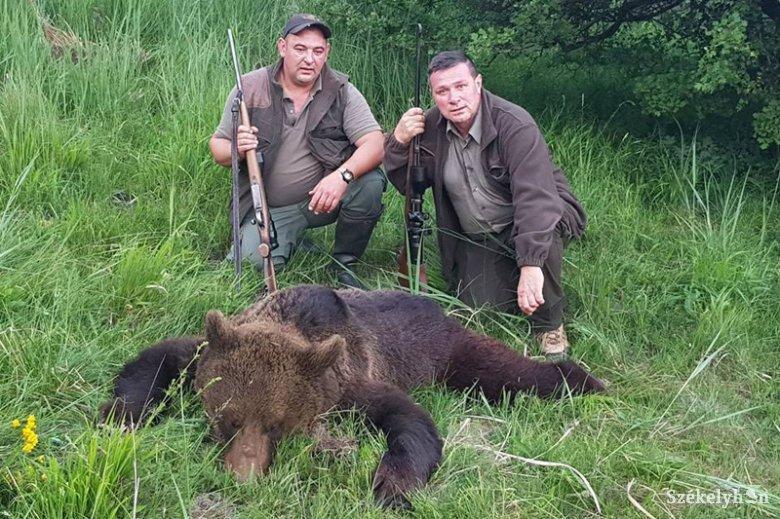 Kilőtték Homoródremete határában a kisfiúra támadó medvét