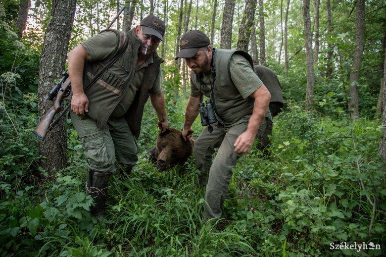 Tusnádfürdői medveügy: hat példány kiemelését hagyta jóvá a Környezetvédelmi Minisztérium
