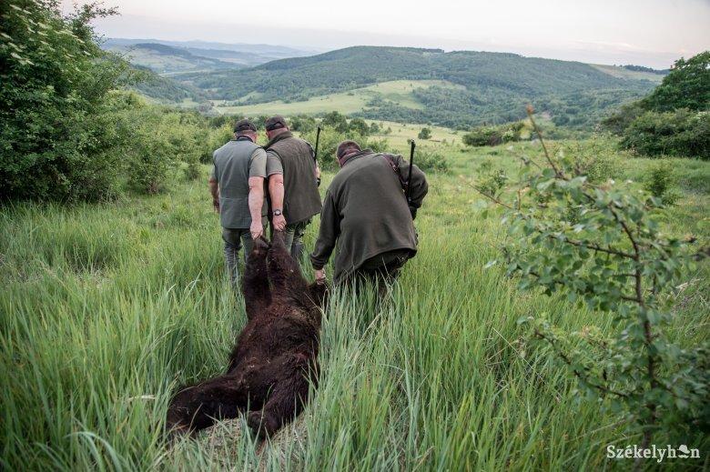Félmegoldás Bukarestből: hat medvét Tusnádfürdőn hagynak