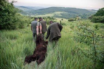 Cáfolja Tánczos Barna, hogy a trófeavadászatot szolgálná a veszélyes medvék kilövésének megkönnyítése