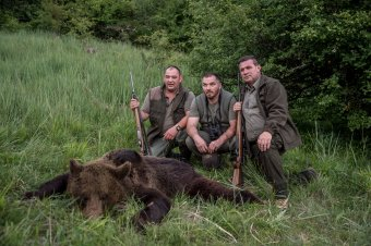 Hatékonynak tartják a vadászati törvényt – kárpótolja az állam a vadállatok áldozatait, illetve azok hozzátartozóit