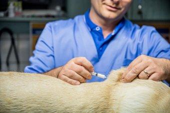 Ráharaptak az álhírre: sokan olyan állatgyógyszert szednek koronavírus ellen, ami veszélyes lehet az emberre