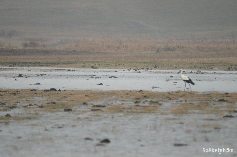 Lassan visszatérnek a gólyák Székelyföldre