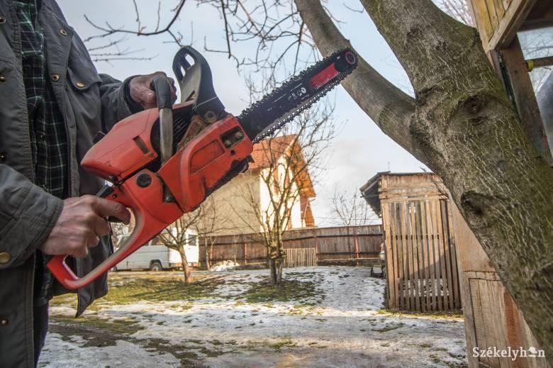Illegális fakitermelés gyanújával indul vizsgálat egy férfi ellen, aki saját területéről vágatott ki fákat