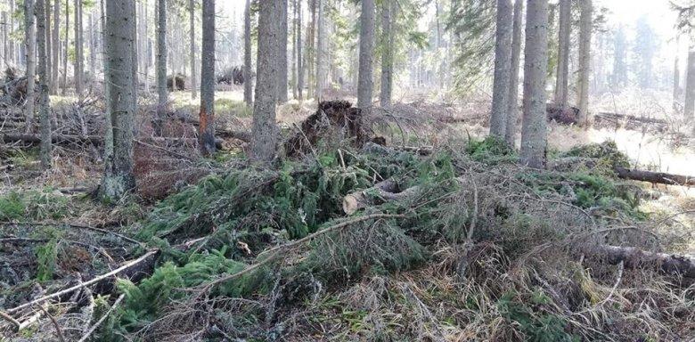 Csellel próbáltak fát lopni Szentegyházán, meghiúsult az akció